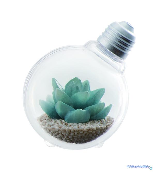 バンダイのガシャポン(ガチャガチャ)「豆電球テラリウム」全4種類 エケベリア