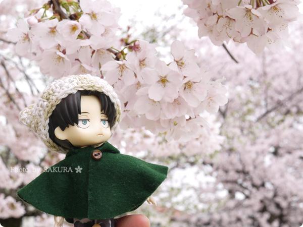 2016年4月5日近所の公園の桜とオビツろいど兵長