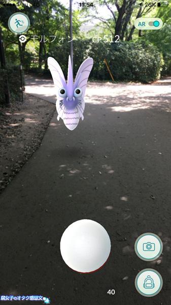 清水公園でモルフォンと遭遇