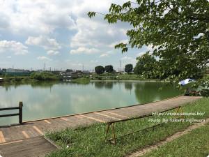 越谷・出羽公園のピカチュウ出現場所 左に沼