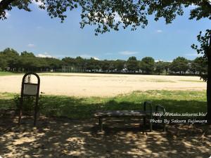 越谷・出羽公園のピカチュウ出現場所 右に野球場