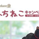 【数量限定】カフェ・ベローチェ&シャノワール【ふちねこ】ドリンク3杯分のレシートでミニチュア猫プレゼント