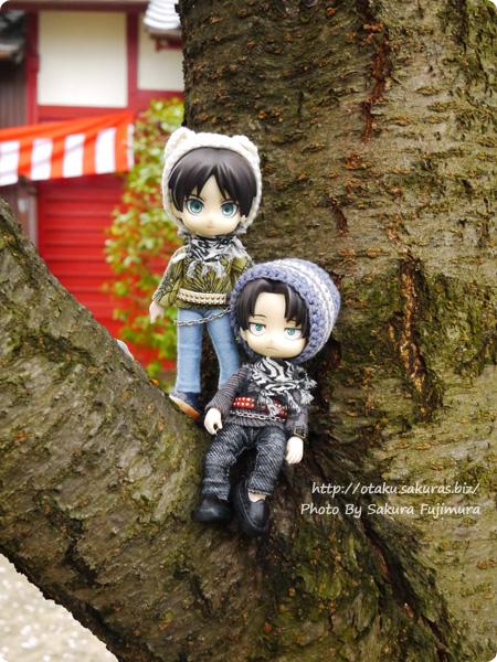 小さい神社でお花見 桜の木の枝のオビツろいどリヴァイとエレン