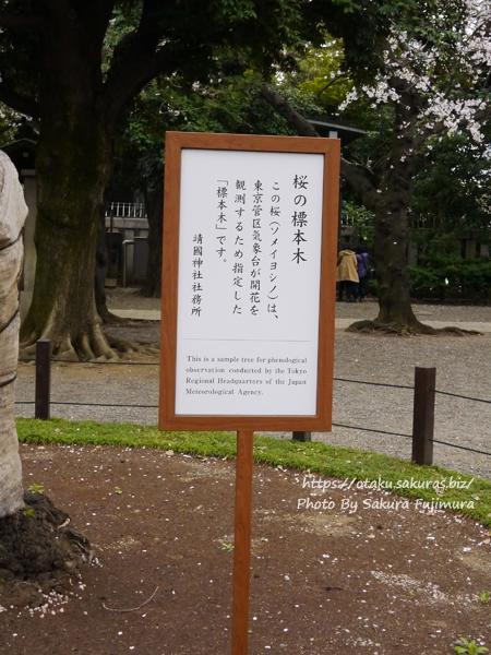 靖国神社 東京気象台が観測する桜の標本木 立札